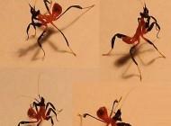 First instar, L1, Orchid mantis nymphs